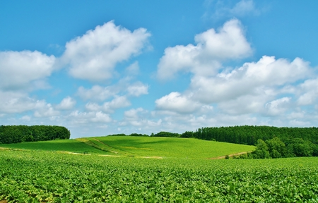 wheat Biei beautiful Patchwork Road in hokkaido