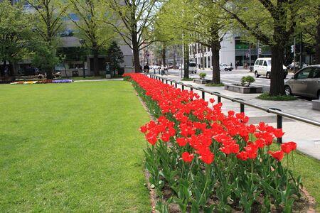 odori: Flowerbed of Sapporo Odori Park