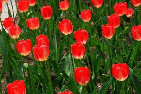 Flowerbed of Sapporo Odori Park