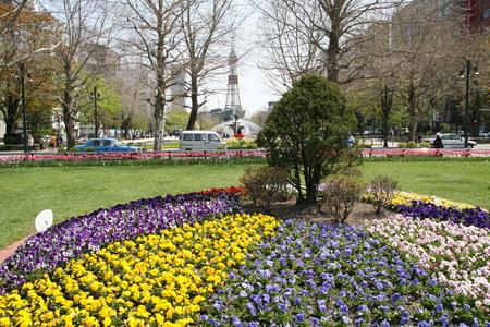 odori: Spring of Sapporo Odori Park