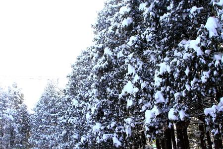 Anti-snow forest Stock Photo