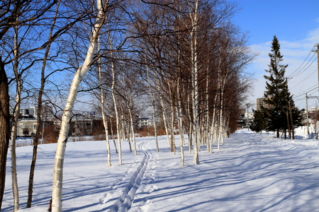 Sapporo snow walking, ski walking trail