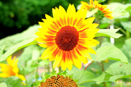 echinacea: Summer flowers in the park Stock Photo