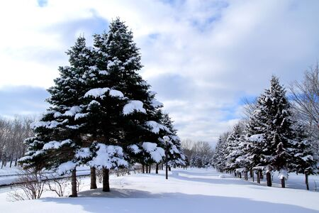雪の札幌公園