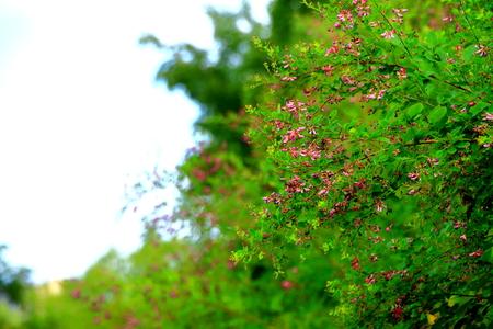 Summer where field flowers bloom