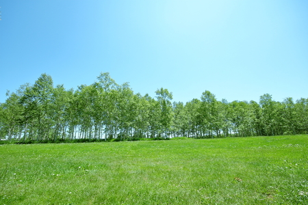 Scenery of Sapporo Maeda Forest Park where young leaves grow thick