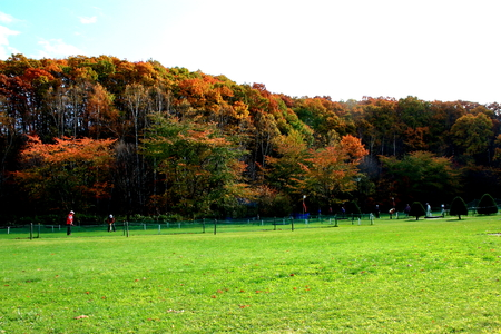 Park golf course in in Hokkaido, Sapporo Hiraoka Park in autumn Фото со стока