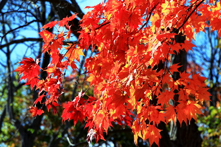 Autumn scenery of the park in in Hokkaido, Sapporo