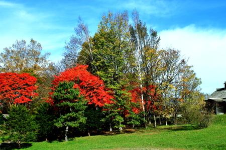In Hokkaido in Sapporo in in Hokkaido pioneering village, autumn leaves scenery