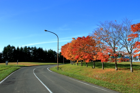 Scenery of autumn leaves of in in Hokkaido, Sapporo in in Hokkaido pioneeri Stockfoto