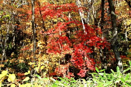 In Hokkaido, Sapporo in Hokkaido pioneering village, autumn leaves scenery