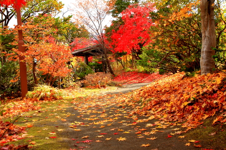 The autumnal leaves of the Japanese garden in in Hokkaido, Sapporo Foto de archivo