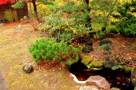 The autumnal leaves of the Japanese garden in in Hokkaido, Sapporo Stock Photo