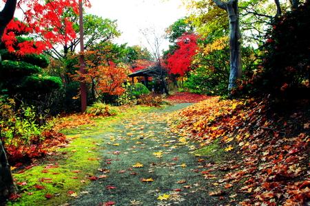 The autumnal leaves of the Japanese garden in in Hokkaido, Sapporo Foto de archivo