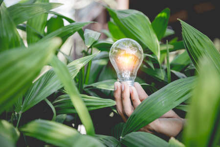 Hand holding light bulb,energy sources for renewable,natural energy and love the world concept. 免版税图像