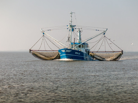 WADDENSEA, NETHERLANDS - SEPTEMBER 27, 2014: Shrimp trawler fishing on the Wadden Sea