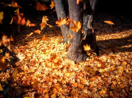 Leaves falling from tree in autumn