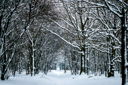 extensive: Footpath and trees covered in snow in winter season in the Netherlands Stock Photo