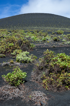 scoria: Cone of ash, lapilli and volcanic rock in the process of being colonised by plants.  Teneguía Volcano in the south of the island La Palma, Canary Islands, Spain Stock Photo