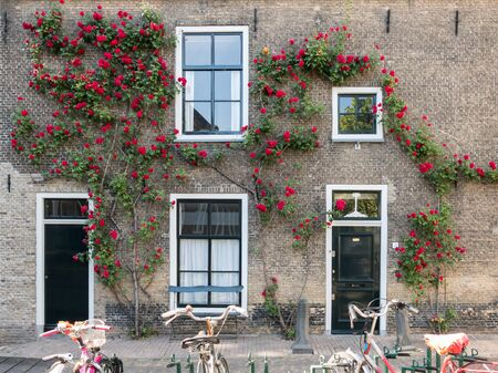 old center: GOUDA, NETHERLANDS - JUNE 10, 2015: House wall with front doors, windows and climbing rose, parked bicycles, in the old center
