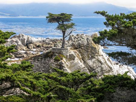 17: The Lone Cypress tree, Pebble Beach, 17 Mile Drive, California, USA Stock Photo
