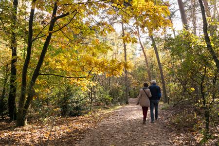 parejas caminando: Senior pareja caminando en el bosque en un día soleado en otoño, Doorn, Países Bajos Foto de archivo