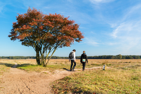 People walking on footpath over heathland in autumn, Netherlands