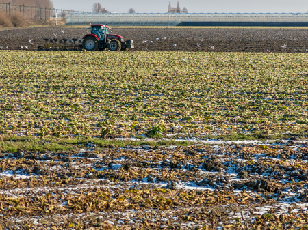 ploughing field: Tractor ploughing and cultivating the field of Dutch polder in winter in the Netherlands Stock Photo