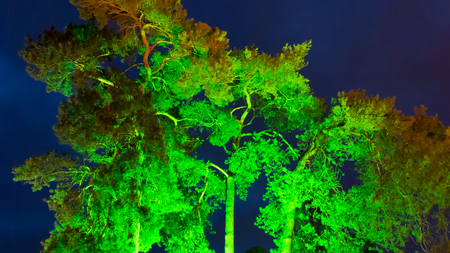 crone: Illuminated crone branches and leaves of old tree with deep blue sky at nightfall