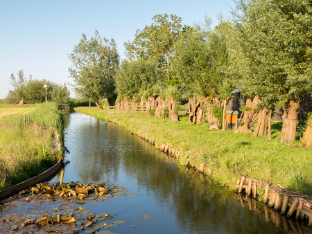 pollard willows: Ditch with row of pollard willows and grassland in Waterland polder near Durgerdam in Amsterdam, Netherlands Stock Photo