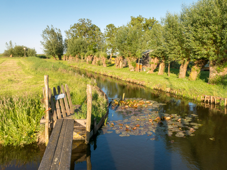Ditch with row of pollard willows and grassland in Waterland polder near Durgerdam in Amsterdam, Netherlands 写真素材