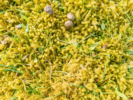 droppings: Close-up of moss, leaves of grass and rabbit droppings in nature, Netherlands