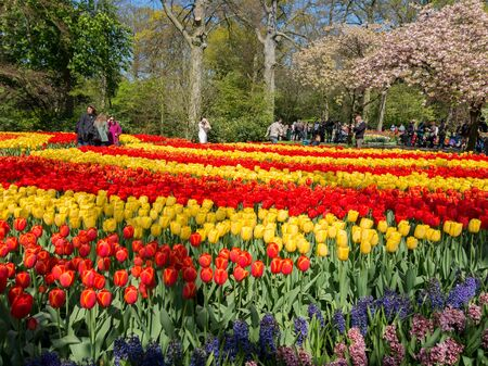 lisse: Tourists and yellow and red tulips in spring in the Keukenhof Park in Lisse, Holland, Netherlands