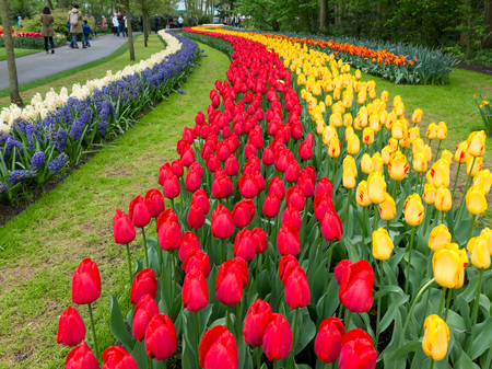 flowerbeds: People and flowerbeds with tulips and crocuses in Keukenhof Park, the Garden of Europe in Lisse, Netherlands