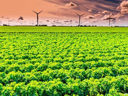 flevoland: Farmland and wind turbines in Flevoland polder, the Netherlands