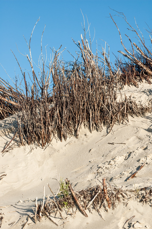 desert ecosystem: Detail of sand dunes with willow twigs fences against blue sky on Spiekeroog island, Lower Saxony, Germany.
