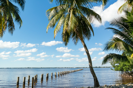 myers: Edison Pier in Caloosahatchee River and palm trees in Fort Myers, Florida, USA