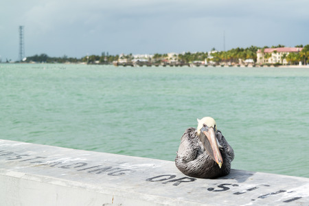 key west: Brown pelican and south coast of Key West from White Street Fishing Pier, Florida Keys, USA Stock Photo