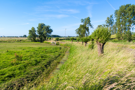 Dutch countryside polder landscape with field, ditch and pollard willows in Spaarndam near Haarlem, Netherlands Stock Photo