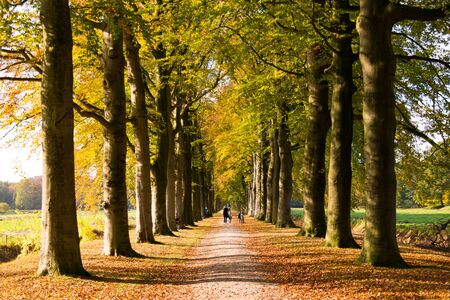 People walking on path with rows of trees in wood of country estate Boekesteyn in autumn, 's Graveland, Netherlands