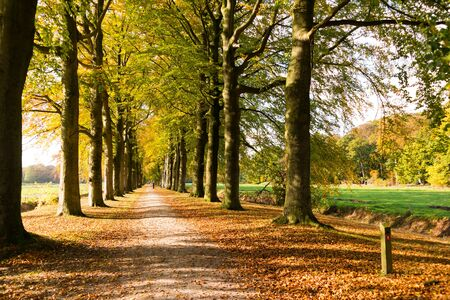 Autumn lane with rows of trees in wood of country estate Boekesteyn, 's Graveland, Netherlands