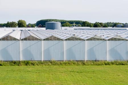 Rows of glasshouses of flower farm in polder near Nieuwaal, Bommelerwaard, Gelderland, Netherlands