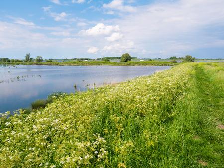 Polderlandschap met dijk, bloemen, gras en moerassig moeras op het eiland Tiengemeten in de Haringvliet, Zuid-Holland, Nederland