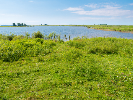 Landscape of polder with marsh and grass on Tiengemeten island in Haringvliet estuary, South Holland, Netherlands