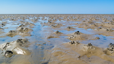 Mud flats with pattern of casts made by burrowing lugworms at low tide on Waddensea, Netherlands Stock Photo