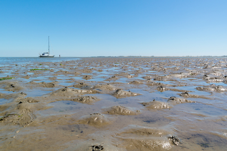 Panorama of mud flat with casts of lugworm and dried out sailboat at low tide on Waddensea, Netherlands Stock Photo