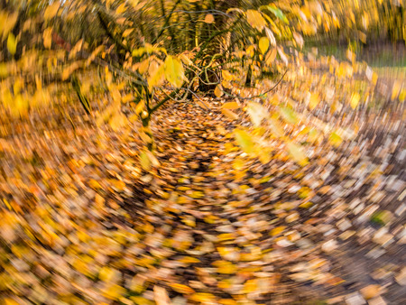Autumn leaves in yellow and orange falling and fallen in rotating motion blur - purposely blurred