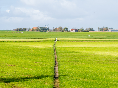 Polder landscape with pasture, footpath and farmhouse near Workum, Friesland, Netherlands