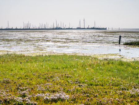 Panorama of harbour, salt marsh and tidal flat at low tide of Wadden Sea on West Frisian island Schiermonnikoog, Netherlands Stock Photo