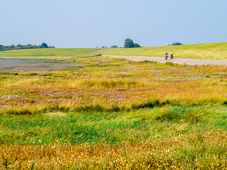 People riding bicycles on dike with salt marshes at low tide, West Frisian island Schiermonnikoog, Netherlands